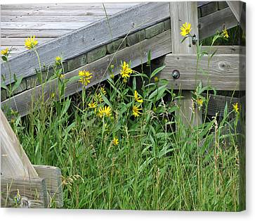 Under The Boardwalk Canvas Print by Laurel Powell
