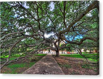 Under The Century Tree Canvas Print by David Morefield