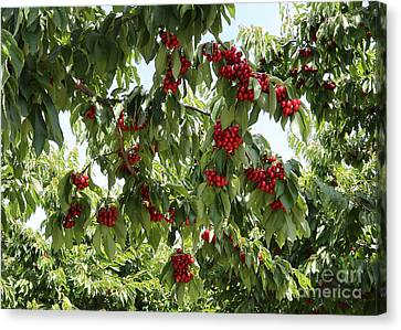 Grocery Store Canvas Print - Under The Cherry Tree by Carol Groenen