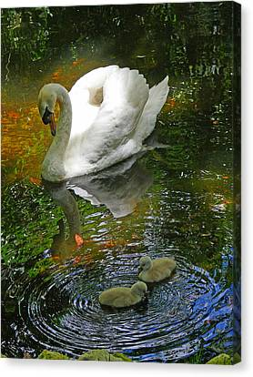 Under The Cobs Watchful Eye Canvas Print