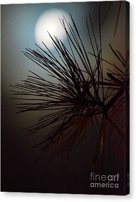 Under The Moon II Canvas Print by Maria Urso