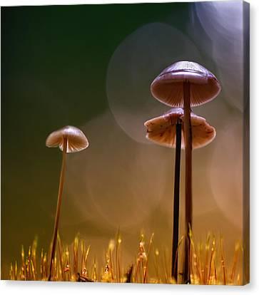 Under The Mushroom Canvas Print by Kent Mathiesen