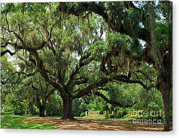 Canvas Print featuring the photograph Under The Oaks by Bob Sample