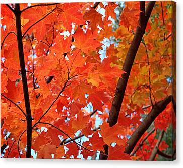 Under The Orange Maple Tree Canvas Print by Rona Black