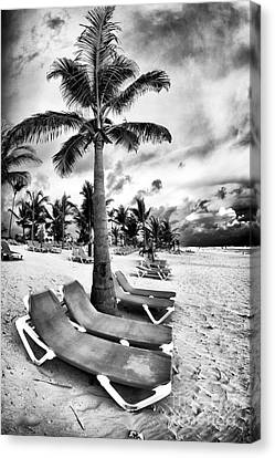 Under The Palm Tree Canvas Print by John Rizzuto