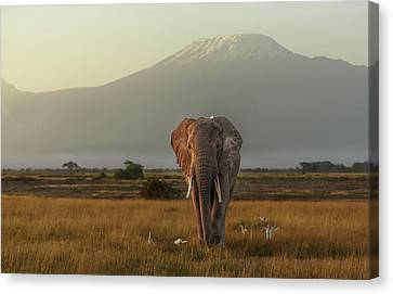 Elephants Canvas Print - Under The Roof Of Africa by Massimo Mei