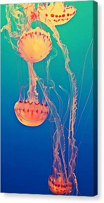 Canvas Print - Under The Sea by Lynsie Petig