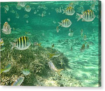Under The Sea Canvas Print by Peggy Hughes