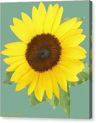 Under The Sunflower's Spell Canvas Print by Patricia Keller