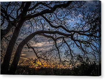 Under The Tree And Through The Fence Canvas Print by Kelly Kitchens