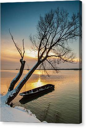 Under The Tree Canvas Print by Davorin Mance