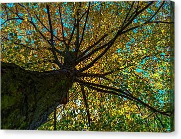 Under The Tree S Skirt Canvas Print