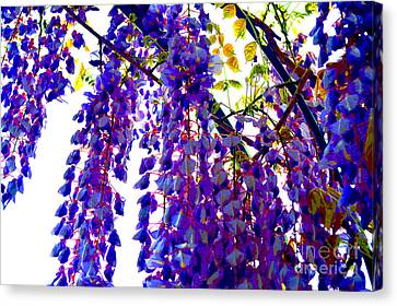 Under The Wisteria Canvas Print by Alys Caviness-Gober