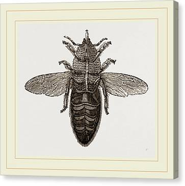 Under View Of Neuter Bee Canvas Print by Litz Collection