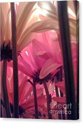 Underbush  Canvas Print by Susan Townsend
