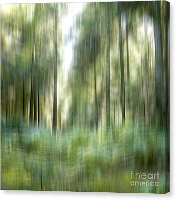 Undergrowth In Spring.  Canvas Print by Bernard Jaubert