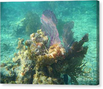 Pennekamp Canvas Print - Undersea Fans by Adam Jewell
