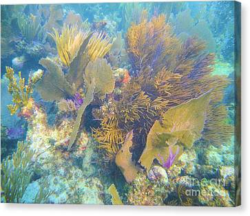 Pennekamp Canvas Print - Undersea Forest by Adam Jewell