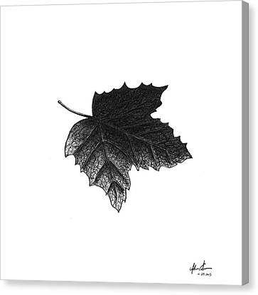 Underside Of A Leaf Canvas Print