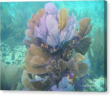 Pennekamp Canvas Print - Underwater Bouquet by Adam Jewell