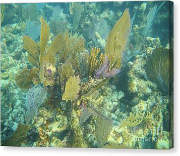 Pennekamp Canvas Print - Underwater Fans by Adam Jewell