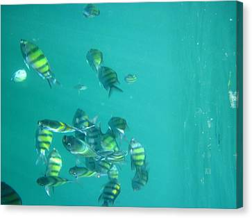 Underwater - Long Boat Tour - Phi Phi Island - 011315 Canvas Print by DC Photographer