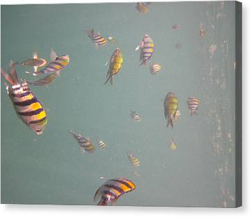 Underwater - Long Boat Tour - Phi Phi Island - 011321 Canvas Print by DC Photographer