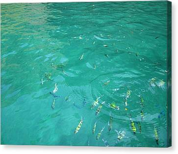 Underwater - Long Boat Tour - Phi Phi Island - 01136 Canvas Print by DC Photographer