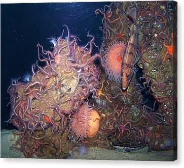 Underwater Sea Life Canvas Print by Christine Drake