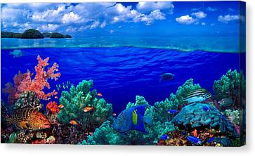 The Tiger Canvas Print - Underwater View Of Yellowbar Angelfish by Panoramic Images