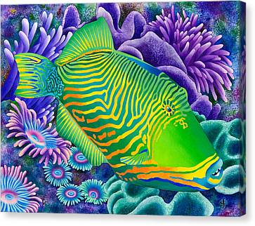 Undulated Trigger Fish Canvas Print by Carolyn Steele