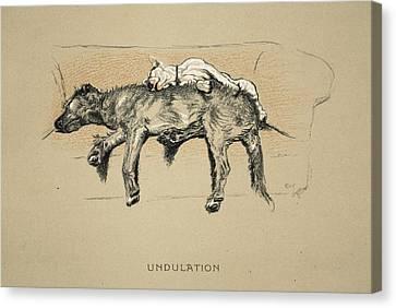 Undulation, 1930, 1st Edition Canvas Print by Cecil Charles Windsor Aldin