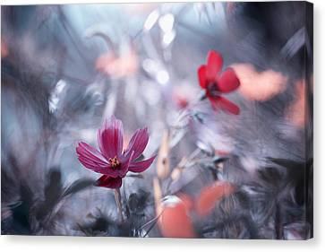 Une Autre Fleur, Une Autre Histoire Canvas Print