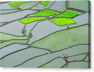 Unesco World Heritage Site, Rice Canvas Print by Michael Runkel