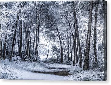 Unexpected Snowfall Canvas Print by Marc Garrido