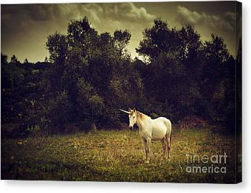 Unicorns Canvas Print - Unicorn by Carlos Caetano
