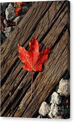 Uniquely Red Canvas Print by Pamela Baker