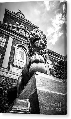 University Of Cincinnati Lion Black And White Picture Canvas Print by Paul Velgos