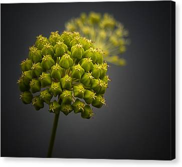 Unknown Wildflower Canvas Print by Peter Scott
