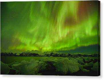 Unleashed Canvas Print by Ted Raynor