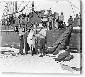 Unloading Pony In Antarctica Canvas Print by Scott Polar Research Institute
