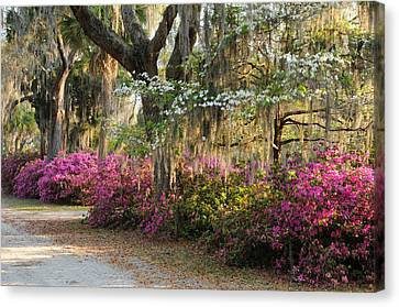 Canvas Print featuring the photograph Unpaved Road In Spring by Bradford Martin