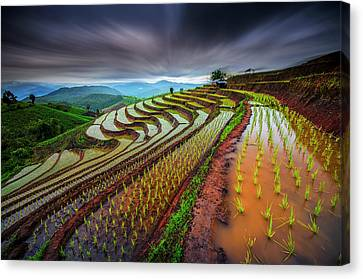 Unseen Rice Field Canvas Print