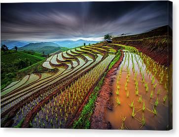 Unseen Rice Field Canvas Print