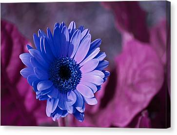 Canvas Print featuring the photograph Untitled by David Stine