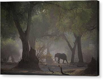 Elephants Canvas Print - Untitled by Giovanni Casini