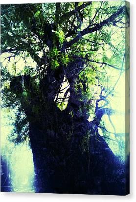 Untitled -tree Star Canvas Print by Juliann Sweet
