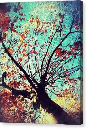 Untitled Tree Web Canvas Print by Juliann Sweet