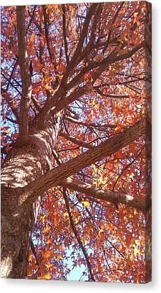 Up A Tree  Canvas Print by Kiara Reynolds