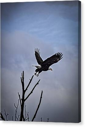 Up And Away  Canvas Print by Thomas Young